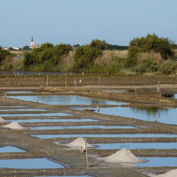 Grey salt from île de Ré